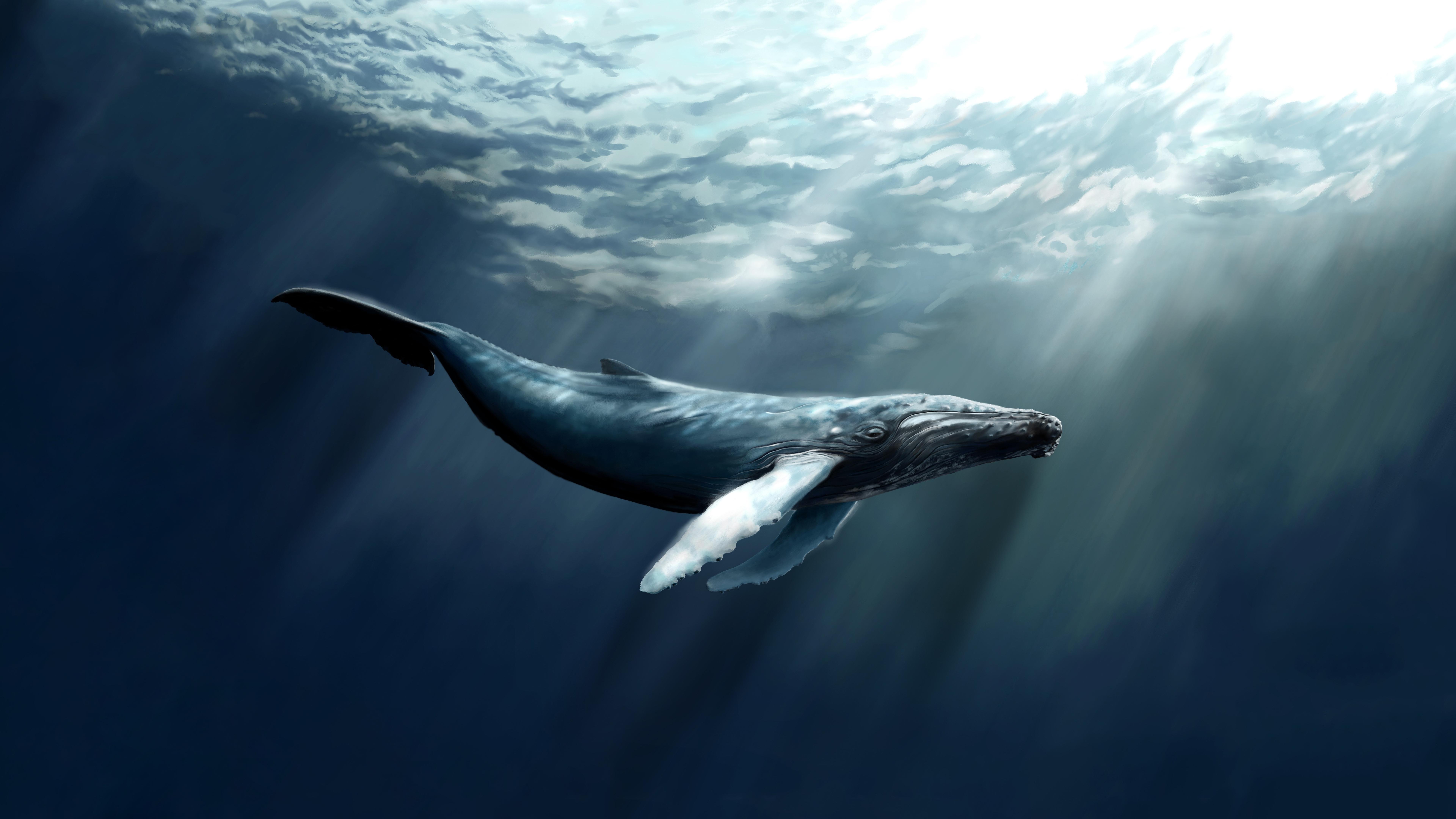 Картинка: Кит, горбатый, океан, поверхность, хвост, огромный