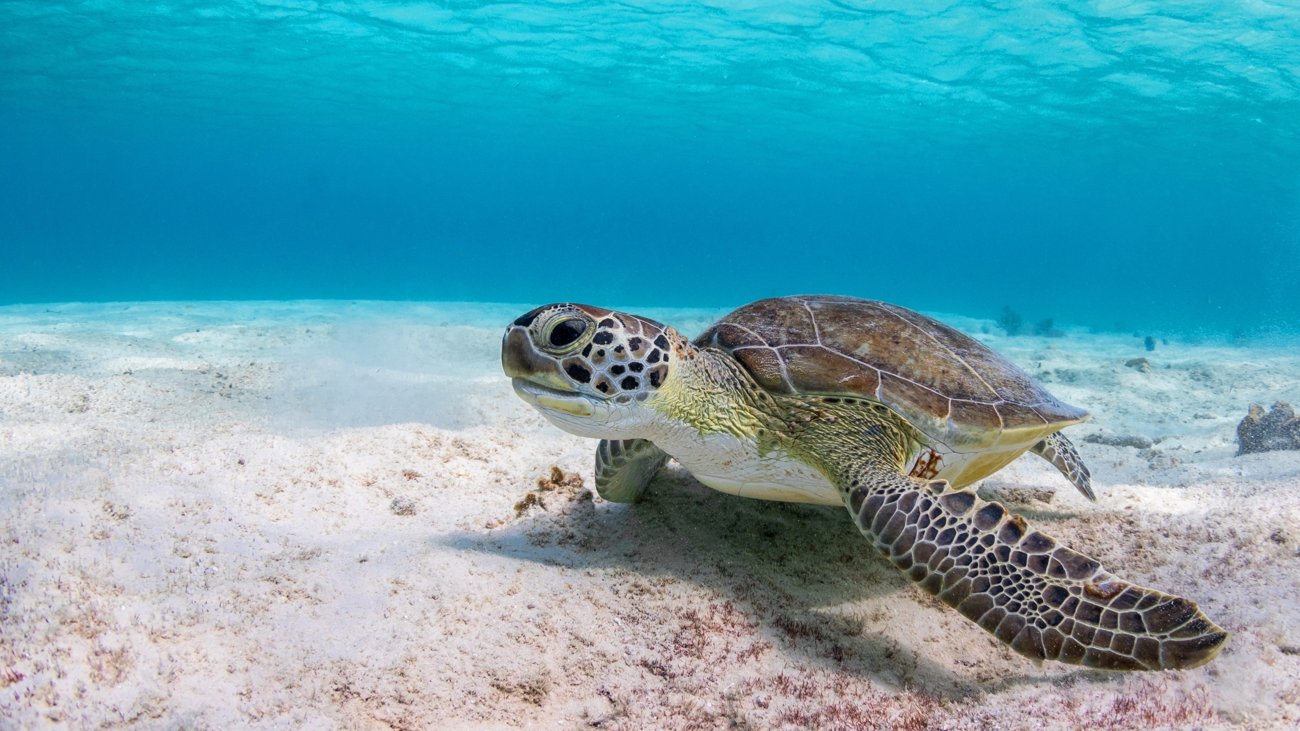 Image: Turtle, carapace, seabed