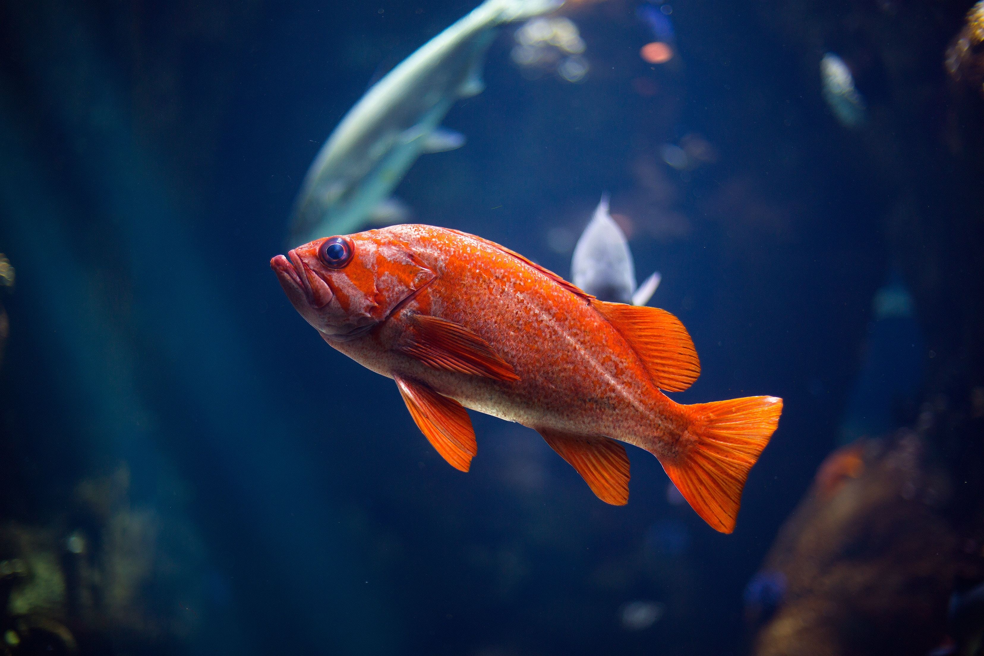 Image: Fish, scales, fins, eyes, water, light