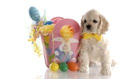 Картинка: Щенок, Пасха, кролик, яйца, цветные, серпантин, бабочка, белый фон