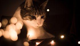 Картинка: Кошка, морда, глаза, смотрит, гирлянда, боке, блики, тёмный фон