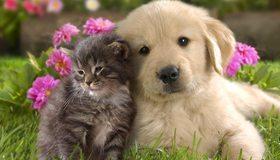 Картинка: Щенок, котёнок, рядом, вместе, дружба, пушистые, трава, цветы