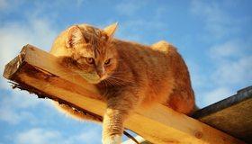 Картинка: Кот, рыжий, шерсть, глаза, лежит, брусок, небо