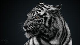 Картинка: Тигр, белый, хищник, полосы, опасность, серый, арт