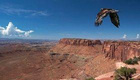 Картинка: Ястреб, птица, хищная, крылья, полёт, высота, каньон, небо