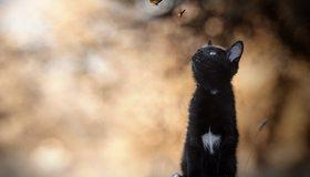 Картинка: Котёнок, кошка, чёрный, белое пятнышко, пенёк, сидит, бабочки, боке, размытость