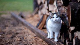 Картинка: Кошка, взгляд, внимание, дрова, брусок, дерево, размытость