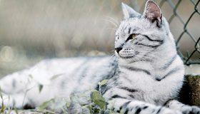 Картинка: Кот, белый, полосатый, трава, лежит, забор