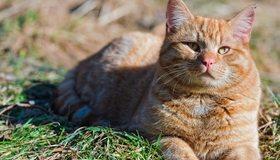 Картинка: Кот, морда, рыжий, лежит, полосы, солнце, тень