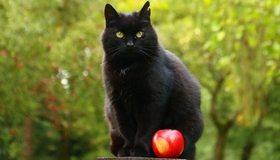 Картинка: Кот, чёрный, ухо, сидит, яблоко, красное, боке