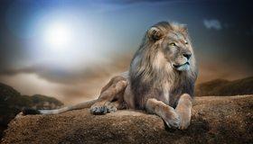 Картинка: Лев, хищник, грива, морда, голова, глаза, взгляд, лапы, хвост, лежит, холмы, небо