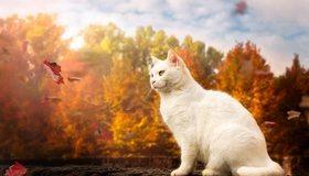Картинка: Кошка, белая, пушистая, листья, осень, деревья, облака