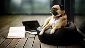 Картинка: Собака, лежит, подушка, книга, пол, ноутбук