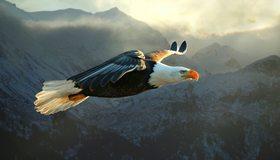 Картинка: Орлан, белоголовый, полёт, крылья, перья, горы, небо, туман, свет