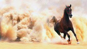 Картинка: Лошадь, скачет, пыль, песок
