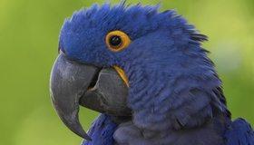 Картинка: Попугай, птица, клюв, глаз, перья