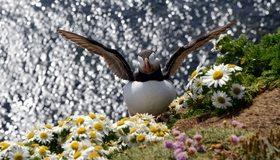 Картинка: Тупик, птица, крылья, ромашки, цветы, вода, холм