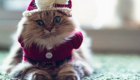 Картинка: Кошка, пушистая, глаза, вязаный, рождественский костюм, шапка, бантик