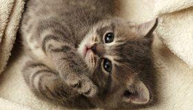 Картинка: Котёнок, маленький, пушистый, мрдочка, глаза, шерсть, лапки, лежит, плед