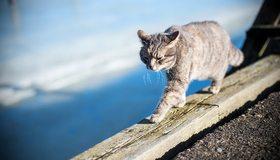 Картинка: Кот, идёт, доски, усы, день, размытость