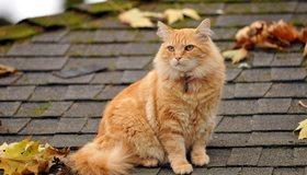 Картинка: Кот, рыжий, сидит, ошейник, взгляд, крыша, листья