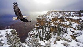Картинка: Белоголовый орлан, орёл, летит, полёт, крылья, горы, зима, снег, высота, птица, хищная