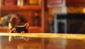 Картинка: Кот, чёрный, глаза, взгляд, уши, отражение