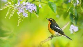 Картинка: Птица, ветка, сидит, весна, природа, окрас, цветы, жёлтый, зелёный