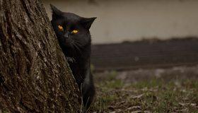 Картинка: Кошка, кот, чёрный, глаза, взгляд, дерево, трава
