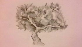 Картинка: Дерево, ствол, ветки, крона