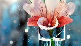 Картинка: цветок, лилия, вода, ваза, частицы, капли, блики