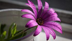 Картинка: Цветок, лепестки, свет