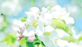 Картинка: Цветки, лепестки, листья