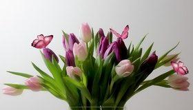 Картинка: Тюльпаны, цветы, букет, листья, бабочки