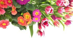 Картинка: Цветы, букет, листья, тюльпаны