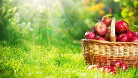 Картинка: Корзина, яблоки, урожай, лето, трава, зелень, солнце, лучи