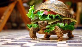 Картинка: Черепаха, чизбургер, еда, ползёт, пол, рептилия, зелень, катлета, помидор, сыр