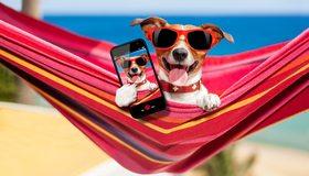 Картинка: Собака, очки, гамак, телефон, отдых, селфи