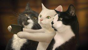 Картинка: Кошки, морда, глаза, фото, телефон