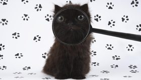 Картинка: Котёнок, чёрный, лупа, морда, глаза, лапы, следы, отпечатки, белый фон