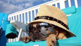Картинка: Собака, шляпа, очки, отражение, лежит, шезлонг, отдых, небо, облака