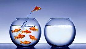 Картинка: Рыбки, аквариум, вода, капли, прыжок