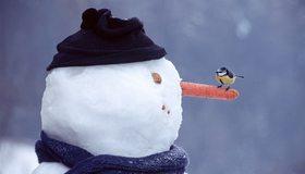 Картинка: Зима, снег, снеговик, шапка, шарф, морковка, птичка, синичка
