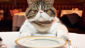 Картинка: Кот, морда, вилка, стол, тарелка, ресторан