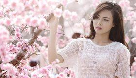 Картинка: Девушка, азиатка, сакура, дерево, розовый, позирует