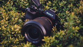 Картинка: Sony, A7, фотоаппарат, камера, объектив, листики, трава