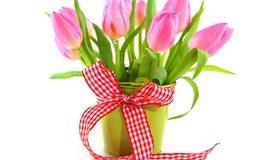 Картинка: Тюльпаны, цветы, букет, лента, ведро, праздник, весна, 8 марта, белый фон