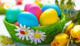 Картинка: Пасха, яйца, цветные, крашеные, корзинка, трава, ромашки, тюльпаны, цветы, божья коровка