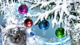 Картинка: Кот, морда, снег, снежинки, ёлочка, игрушки, шары, звёздочки, снеговик, зима, Новый год, праздник