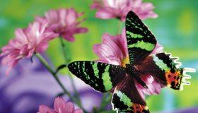 Картинка: Бабочка, цветы, размытость